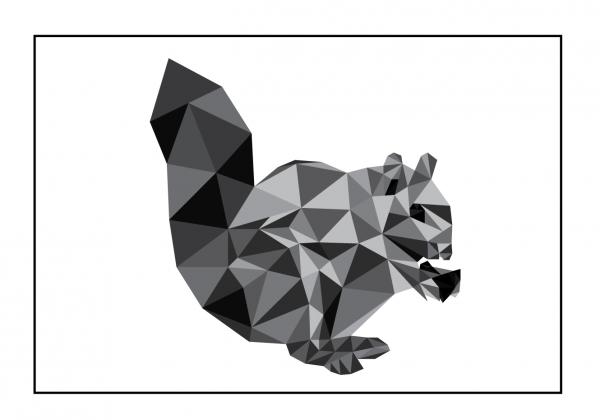 egernet - illustrations tegning - billeder - fotografier
